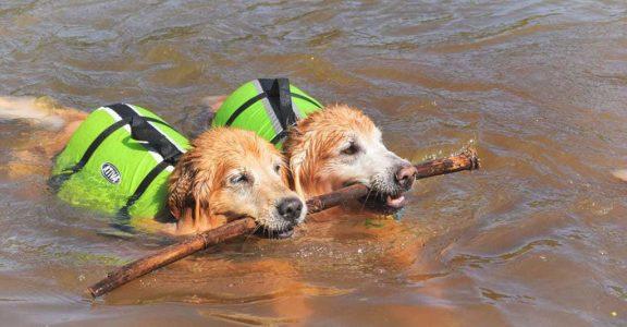 mini-rafting-com-pet (5)